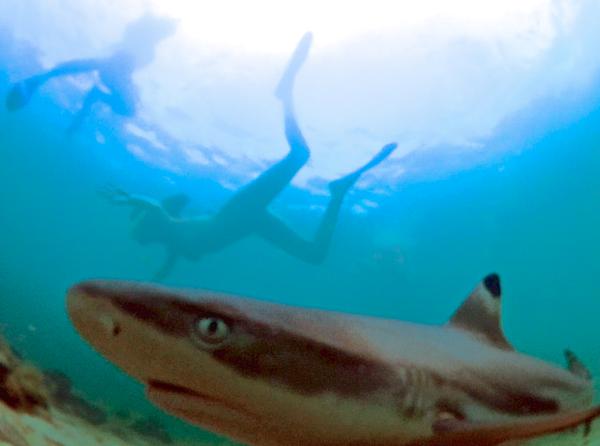 eagle_point_anilao_batangas_beach_resort_resorts_philippines_games_activities_venue_venues_baby_sharks