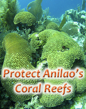 The Affects Of The Aquarium Trade On Reefs, And What We Need To Do To Heal Them