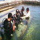 Introductory Diving at Eagle Point Resort